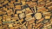 3,5 milioane de familii se incalzesc cu lemn de foc in Romania, la un pret cu 250% mai mare ca acum 6 ani