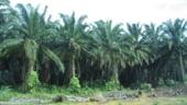 Oportunitati de afaceri: Conferinta dedicata jucatorilor din piata uleiului de palmier