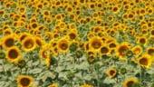 CE va decide soarta ajutoarelor agricole pentru Romania pana la 1 decembrie