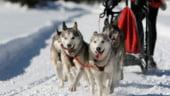 Planuri pentru vacanta de iarna: Petrece-ti Craciunul in Laponia!
