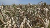Cati bani le va da Guvernul fermierilor care vor avea pierderi in 2012