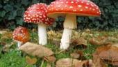 Legatura uimitoare intre povestea lui Mos Craciun si ciupercile halucinogene
