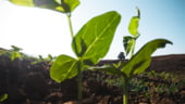 Bulgaria investeste puternic in produsele bio. Este deja cel mai mare producator din lume de ulei de trandafir si de lavanda