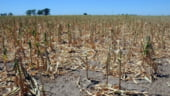 "Fondul Mutual din Agricultura - ""asigurator"" pentru scandaluri alimentare, seceta si inghet"