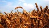 Rusia interzice temporar exporturile de cereale din cauza secetei