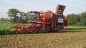 Fermierii britanici ii prefera pe agricultorii romani si bulgari