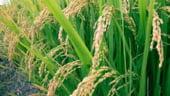 Fermierii au primit circa 1,9 mld. de euro de la APIA in 2012