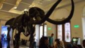 Muzeul Antipa: Utilizatorii pot folosi smartphone-ul pe post de ghid