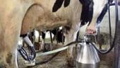 Romania si-a marit productia de lapte cu 13,1% in luna martie