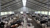 Lectia de agricultura se preda in nord: La fermele olandeze lucreaza roboti