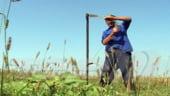 Agricultura a taiat 1,2% din cresterea economica din primele noua luni
