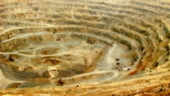 Rosia Montana Gold Corporation sustine ca va investi peste 25 milioane dolari in restaurarea patrimoniului cultural din zona