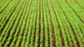 EUOBSERVER: Micii agricultori se lupta pentru fondurile UE