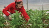 """2014, anul tinerilor fermieri: primesc bani si terenuri """"cadou"""" de la stat"""