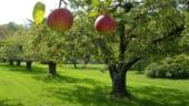 Constantin: Pomicultura va avea un program de reconversie si replantare din 2014