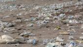 Uniunea Europeana declara razboi deseurilor din plastic: Ce masuri vrea sa ia