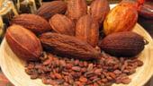 Pretul la cacao scade, din cauza recoltelor bogate