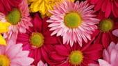 Importul de flori in Romania, de 23 de ori mai mare decat exportul