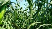 Compania Comcereal Constanta vrea sa fuzioneze cu societatea Siloz Cereale