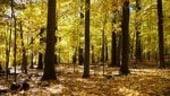 3 mil de euro pentru dezvoltarea zonei Parcul National Muntii Macinului