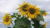 Zece flori de gradina care te ajuta sa iti vinzi mai bine casa