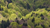 Greenpeace Romania: Aproape jumatate dintre cele 28 de termocentrale pe carbune functioneaza in afara legii