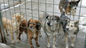 Traian Basescu a promulgat legea eutanasierii cainilor comunitari