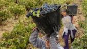 Tara care a devenit cel mai mare producator de vin din lume, ca sa scape de criza