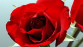 Valentine's Day: Vanzarile online de flori cresc exponential
