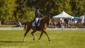 Cai si calareti renumiti din intreaga lume vin sa faca spectacol la Karpatia Horse Show 2018