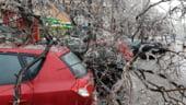 Autoritatile cer oamenilor sa nu mai sune la 112 pentru copaci cazuti. Ce spune Arafat