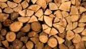 O solutie ERP cu modul special dezvoltat pentru producatorii de mobila: verificarea sursei de provenienta a lemnului