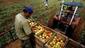 Tabara: Agricultura e mai importanta decat pensiile si salariile