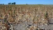 UniCredit: Cresterea economica din 2014 va fi sub cea din 2013, din cauza agriculturii