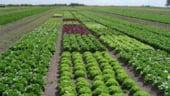 Pe langa agricultura ecologica, culturile si zootehnia pot propulsa Romania in topurile europene