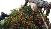 Romanii din Spania spera ca noul guvern va ridica restrictiile de pe piata muncii