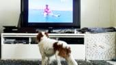Americanii lanseaza prima televiziune dedicata cainilor, DOGTV