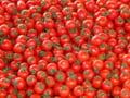 Peste 50.000 de tone de rosii romanesti au intrat pe piata, in 2017