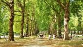 Copacii ajuta Londra sa economiseasca sume de ordinul miliardelor