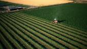 De frica strainilor, statul ofera credite preferentiale romanilor care cumpara terenuri agricole
