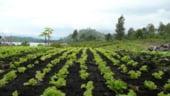 Fermierii trebuie sa depuna, din 1 martie, o noua cerere pentru plata la hectar aferenta lui 2008
