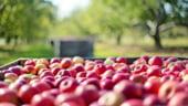 Romania a importat legume si fructe de 1,14 miliarde euro in 2018