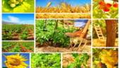 Tema de dezbatere: Agricultura romaneasca, domeniu competitiv in 2014?