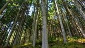 Schweighofer, amendata cu 100.000 de lei pentru depasire de volum de lemn taiat in Romania