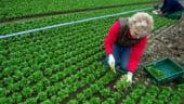 Romania devine in 2013 vedeta celui mai mare targ de agricultura ecologica din lume