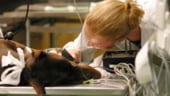Romania discuta cu CE despre infiintarea unui institut de cercetare a sanatatii animalelor