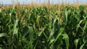 Randamentul redus, principala problema a culturilor agricole din Romania