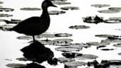 Delta Dunarii, printre preocuparile premierului Tariceanu