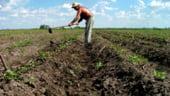 Vass: Veniturile agricultorilor din Romania, cea mai mare crestere din UE