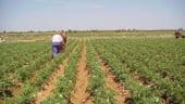 Baconschi: Trebuie eliminate diferentele intre subventiile pentru fermieri